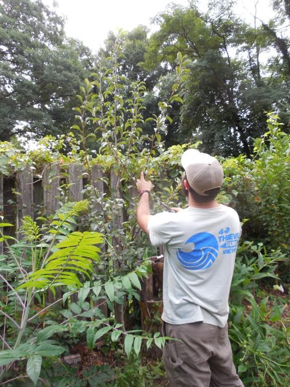 Pruning ponderings