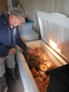 Larry's freezer full of bags of shelled hickories, pecans, and black walnuts he eats and sells to local bakers